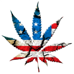 'Marijuana Justice Act' Would End Weed Prohibition Throughout The Land